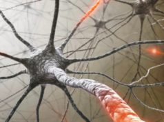 Antisense Therapeutics ASX ANP multiple sclerosis study