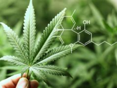 Zelda Therapeutics ZLD treating autism medical cannabis