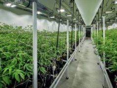 Hydroponics Company ASX THC Ascent Industries Canadian cannabis market
