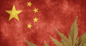 StemCell United ASX SCU China industrial hemp licence