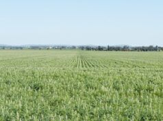 Wide Open Agriculture ASX WOA lupin CSIRO plant based protein