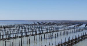 Angel Seafood AS1 ASX oyster demand supply Eyre Peninsula Coffin Bay